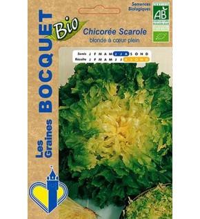 Chicorée Scarole blonde à coeur plein certifiée ECOCERT FR-BIO-01