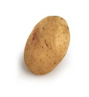 Pomme de terre Agria Biologique