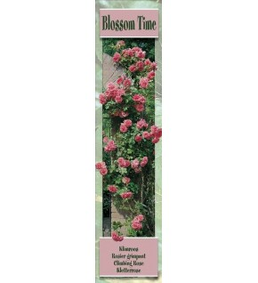 1 Rosier grimpant Blossom Time rose