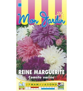Reine Marguerite Comète géante variée