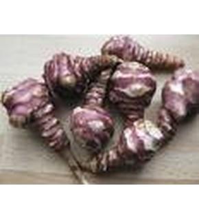 Topinambour violet de Rennes