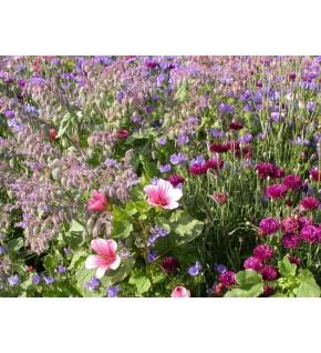 Fleurs annuelles Tapis Médiéval