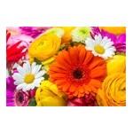 Graines et bulbes de fleurs : capucine, œillet,  jacinthe ...   Graines Bocquet