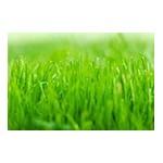 Graines et semences pour gazon   Graines Bocquet