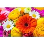 Graines de fleurs à semer - semences florales | Graines Bocquet