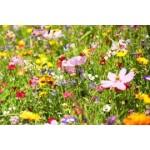 Mélange de graines de fleurs à semer   Graines Bocquet