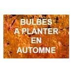 Bulbes de fleurs à planter en automne | Graines Bocquet