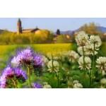 Engrais verts pour jardin et potager | Graines Bocquet