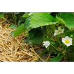 Des couverts végétaux pour un jardin écologique | Graines Bocquet