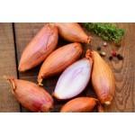 Bulbes d'échalote à planter au potager | Graines Bocquet