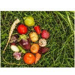 Les Mini- légumes - LES GRAINES BOCQUET