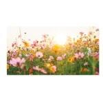 Graines de fleurs champêtres à semer   Les Graines Bocquet