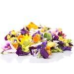 Les Fleurs Comestibles à semer au jardin   Les Graines Bocquet