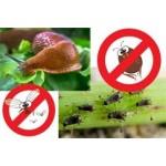 Insecticides et répulsifs pour jardin et potager | Graines Bocquet