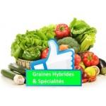 Graines potagères hybrides et spécialités | Graines Bocquet