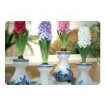 Bulbes de fleurs à offrir en cassette ou en vase | Graines Bocquet
