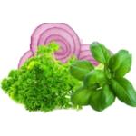 Plantes médicinales à semer au jardin | Graines Bocquet