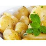 Filets de 25 Plants de Pommes de Terre Hâtives | Graines Bocquet