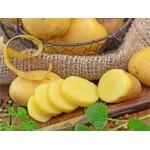 Filets de 25 Plants de Pommes de Terre 1/2 Hâtives | Graines Bocquet