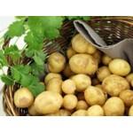 Filet de 25 Plants de Pommes de Terre 1/2 Tardives   Graines Bocquet